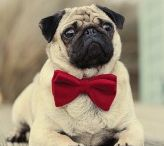 PUGever / I'm addicted with PUG . They are #1 domination and smash my heart with they cuteness