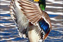 beautifull birds.