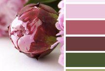 Color & + color