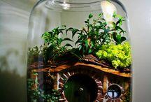 Terrarium / Terrarium Ideas / by Cindy Campbell