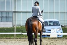 Elitz equestrian / Equestrian fashion clothing www.elitzequestrian.nl