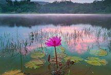 flori si natura