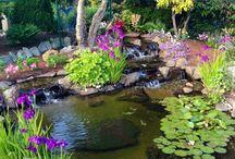 jardin d eau