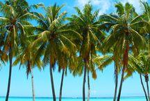 Küba'nın Simgeleri / Küba turlarına gitmeden önce ülkenin milli ağaç, kuş ve çiçeğini öğrenmeye ne dersiniz?  bit.ly/mngturizm-yurtdisi-turlari-kuba-turlari-782015
