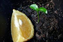 plante din seminte