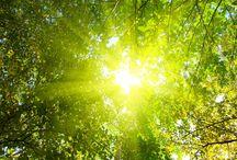 весна солнце картины
