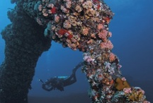 Diving in British Virgin Islands