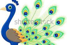 Peacock - elements