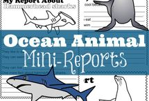ocean animal school projects