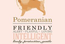 Why poms rule the world