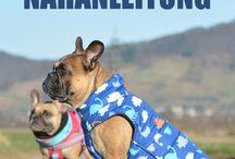 ♡ Zubehör für Hunde ♡ / Auf dieser Pinnwand findest du die schönsten Zubehör Teile & Accessoires für deinen Hund ✓