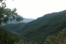Dağ zeytinlikleri / Bayındır Dağ köylerimizin doğal ZEYTİNLİKLERİMİZDEN elde ettiğimiż Naturel Sızma ZEYTİNYAĞLARIMIZI sizlere sunuyoruz.