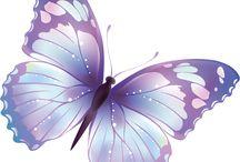 Vlinders ♡
