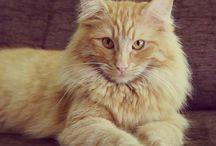Nabatea Cats / www.nabateaweb.com