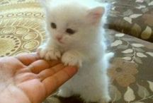 Коты, кошки, котята
