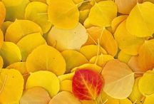 Color - Mostly yellow