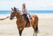 Horse Riding in New Zealand / New Zealand is a fantastic country with stunning diverse scenery, perfect for horse riding and trekking through some awesome countryside.