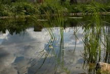 Fürdőtavak, dísztavak, csobogók / bemutató a Citikert által az elmúlt 5 évben készült kerti tavakról, csobogókról