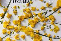 Nature Study | Wattles