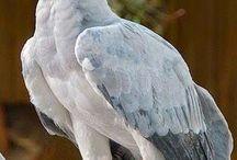 Gyönyörű és ritka madarak