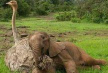 Animali e animali da compagnia