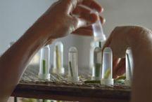 Bloem reageerbuisjes pipetten arrangement Flower / Pipetten omgekeerd gebruiken