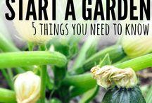 Gardening Ideas / 0