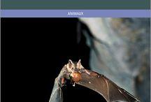 Zoologie - Nouveautés
