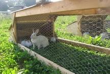 Rabbit houses