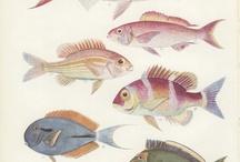 NV1 тема Рыбы. Fish