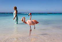 Puur! reizen | Aruba