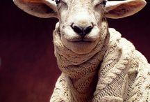 Lamb please freeze