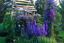 Gardening / by Jean B
