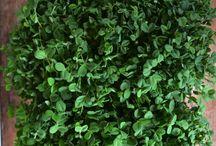 Indoor Garden / #growing #food #indoors #gardening