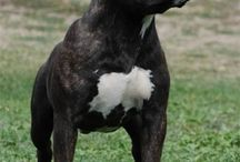 dogs I want/like