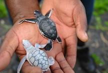 so majestic love sea turtles!