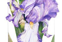 Jewel / Purple