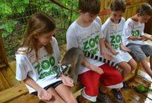 Zoo Camp / Zoo Camp at Dade City's Wild Things