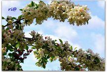 Lente, Spring,