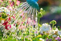 Jardin / Plantas cercos y todo lo relacionado