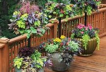 Potted Gardens / Inspiration for container and potted gardens.