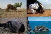 ALLAH'IN MUCİZELERİ