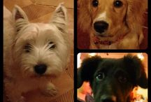 Our pets!