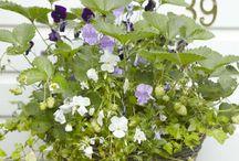 Blommor och odla