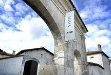 Domaine Francis Abecassis / Visite du vignoble et des chais au Domaine Francis Abecassis à Cognac Bordeaux Réservez avec winetourbooking.com