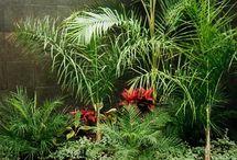 macetas / plantas y flores