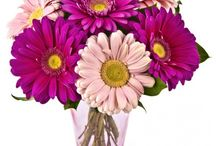 Roflora Gerberas / Take a look at our gerberas bouquets!