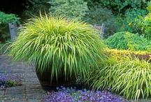 gardens & plants / by Wendy Dorsey