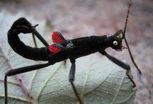 Stick Insects & Praying Mantis