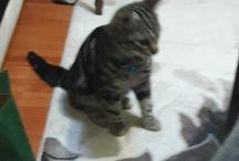 Kedi Ponçik'in Yaramazlıkları